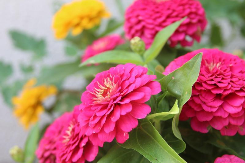 Children's Garden Photos Featured Photo