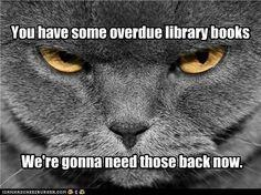 Cat saying you have some overdue books