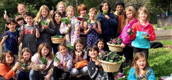 Kale Harvesting Group