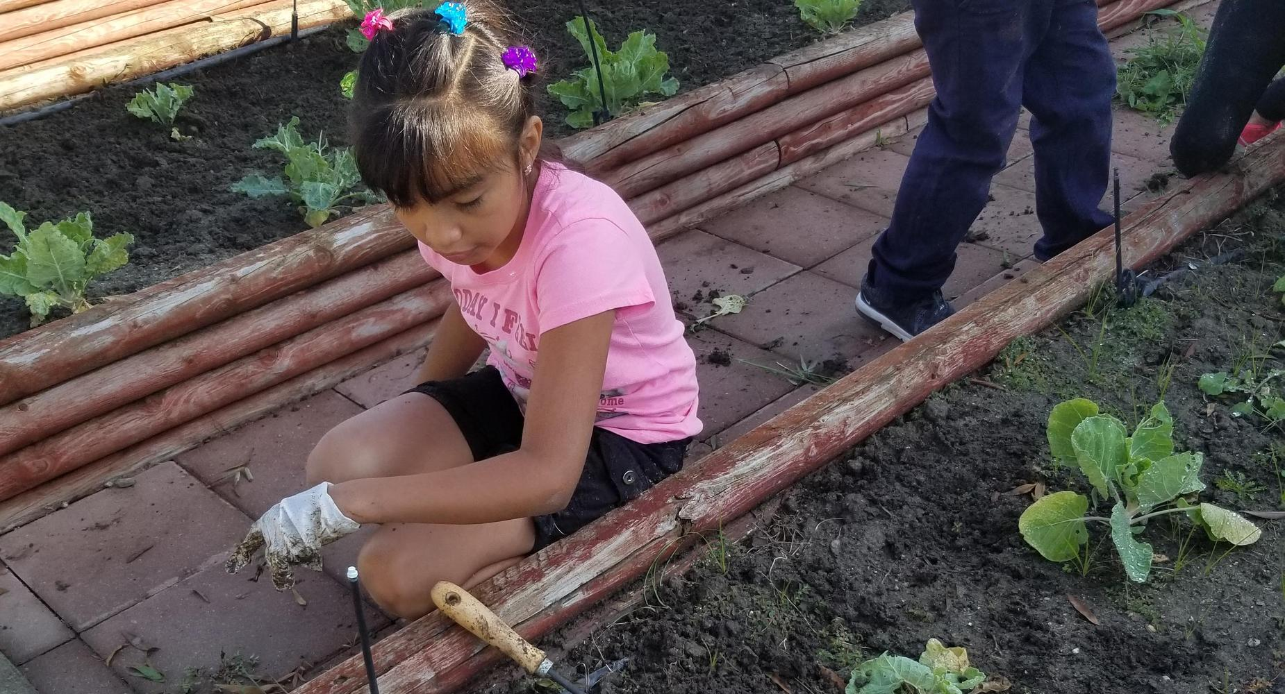 3rd grader working in the school garden.
