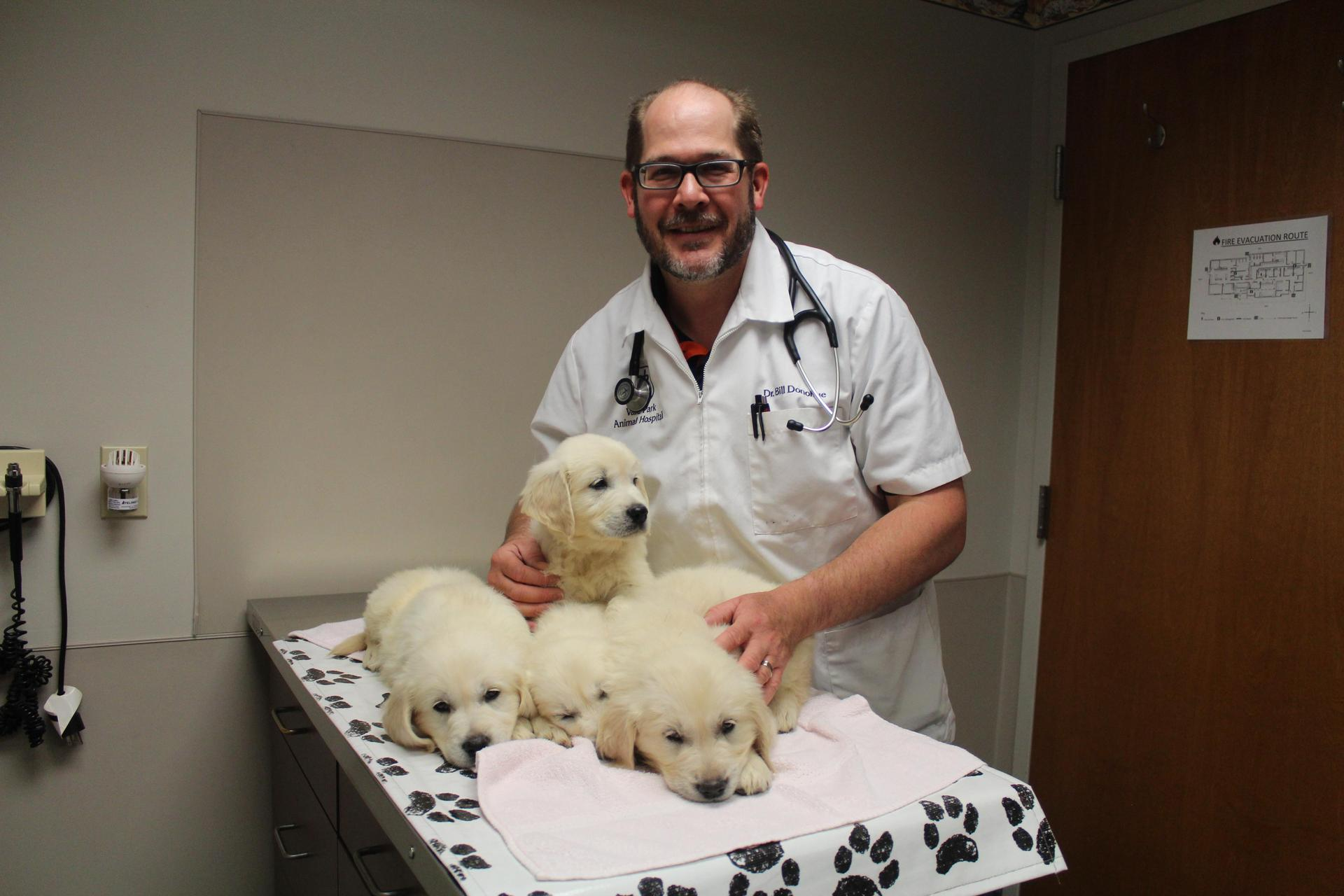 Some of the Viking Pups at their check up with Dr. Bill Donohue of Vale Park Animal Hospital.