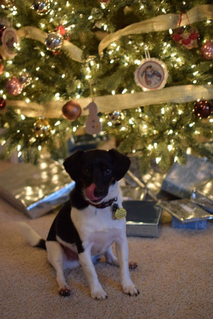 Mrs. Herrera's dog, Scooter
