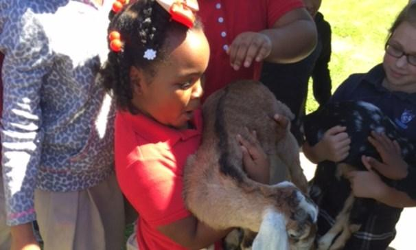 3rd graders got to visit with goats from the farm.