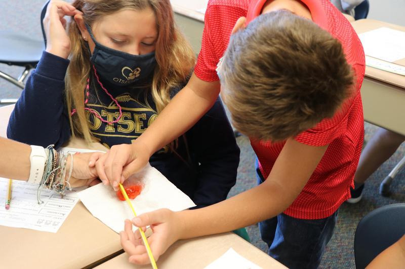 Students measure their gummy bear