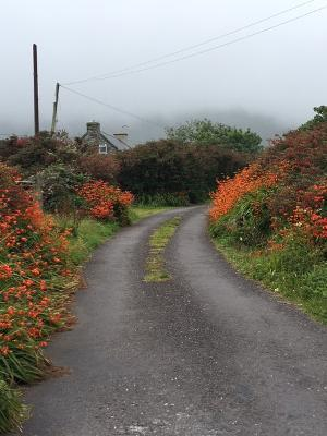 rural road in West Kerry, Ireland.jpg