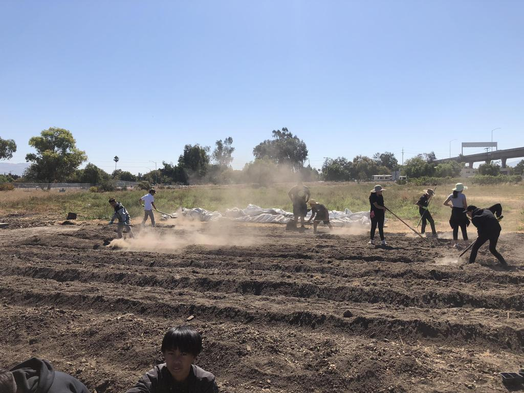 Students shovel dirt to prepare rows for planting.