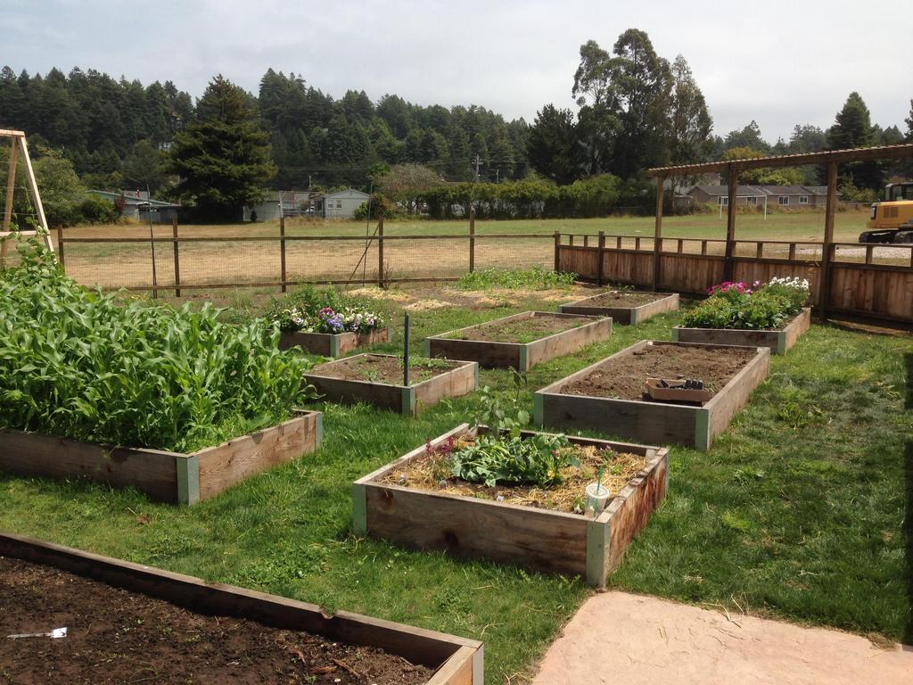 first year of garden