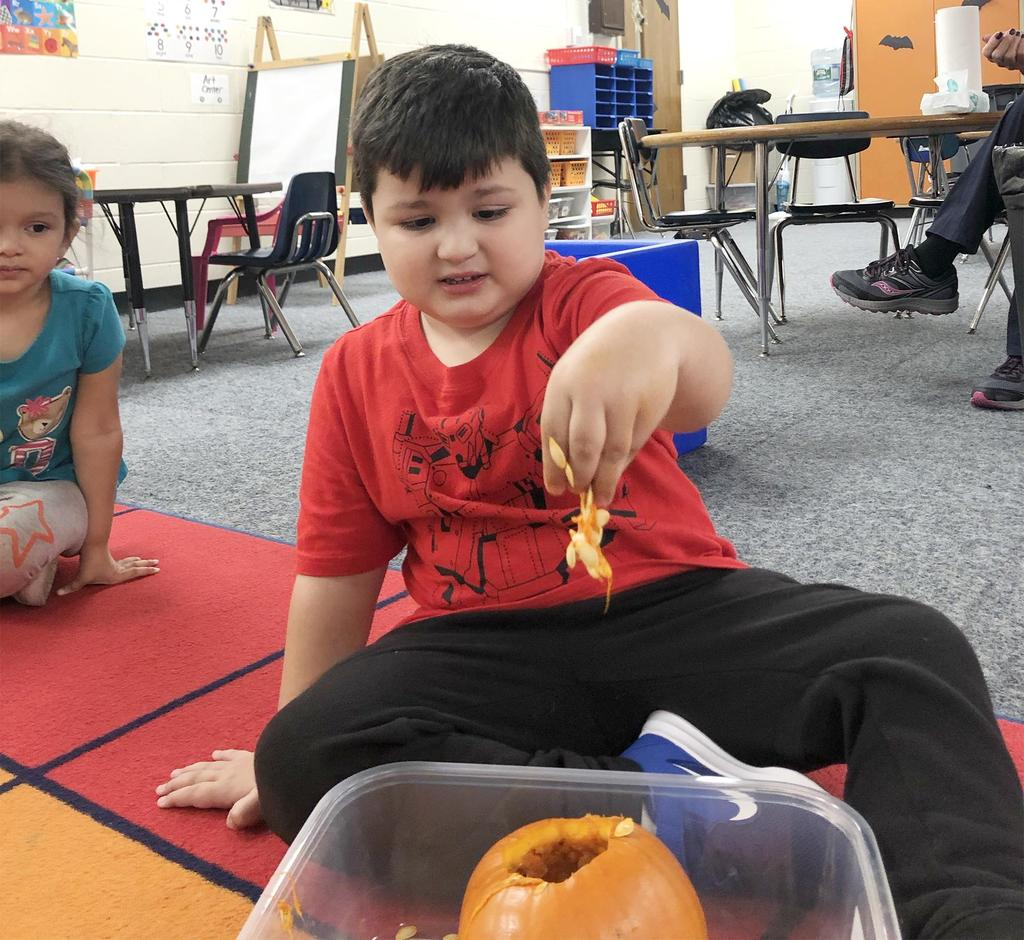 A young student has fun examining the inside of a pumpkin