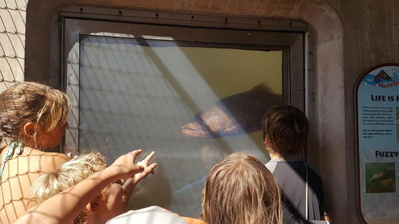 4th Grade Students at the Oroville Fish Hatchery