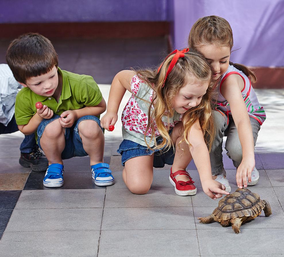 children examining a turtle