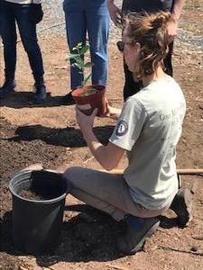 person kneeling near plant container holding a plant up