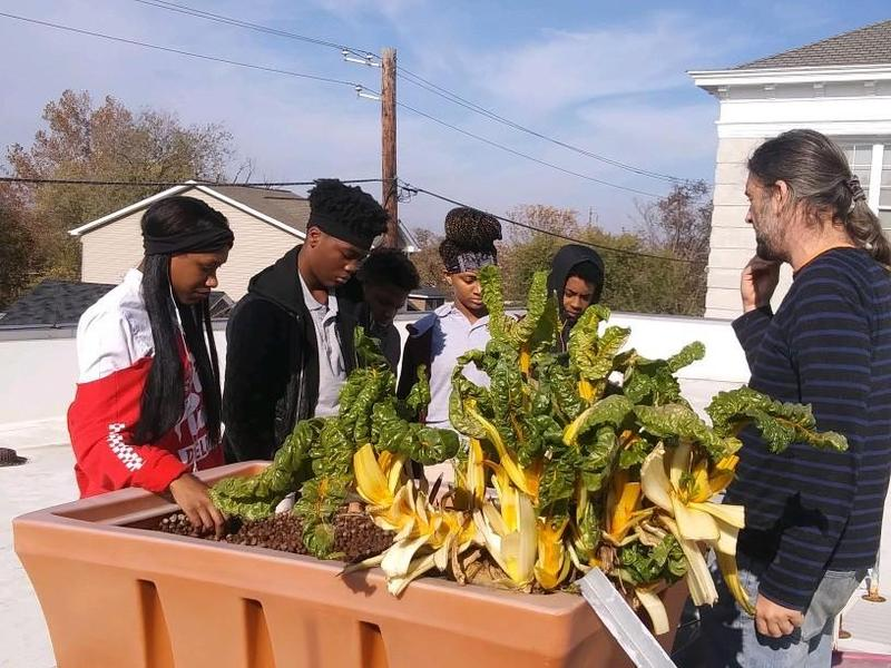 IDEA's Aquaponics System Yields Lettuce and Kale for Scholars to Eat Thumbnail Image