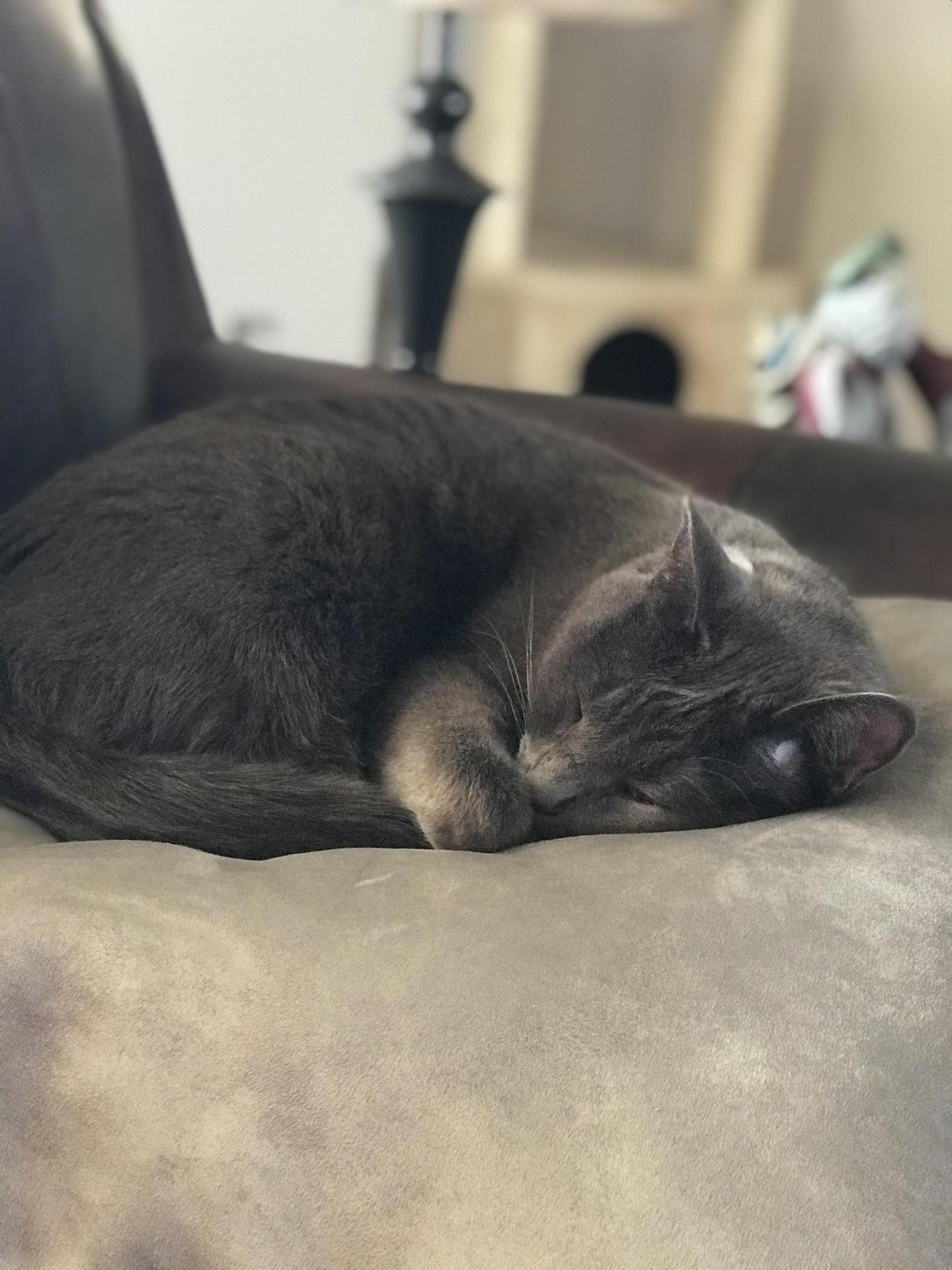 Mrs. SK's Cat