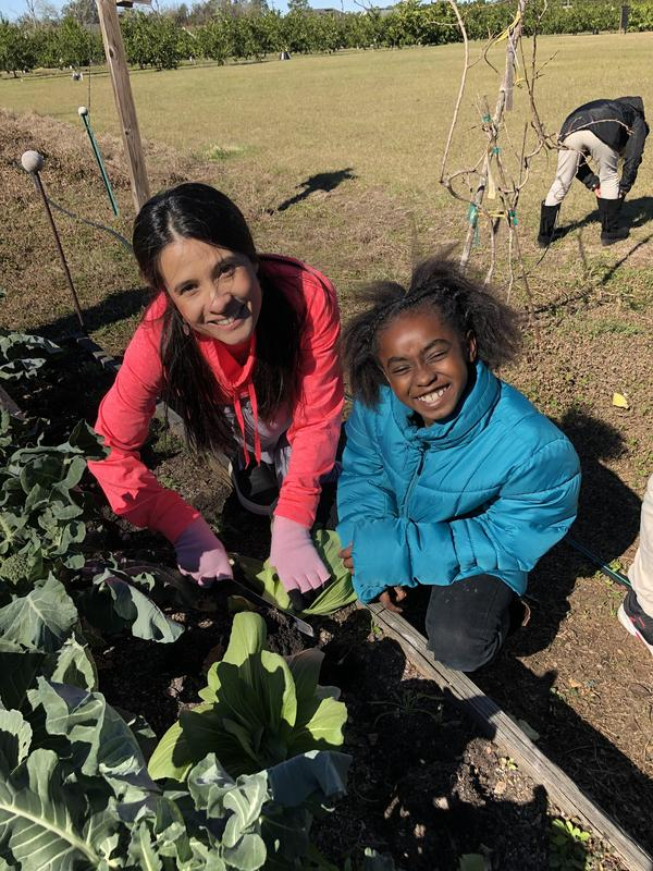 Mrs. Vu and Kaziyah Harris harvesting Bok Choy.