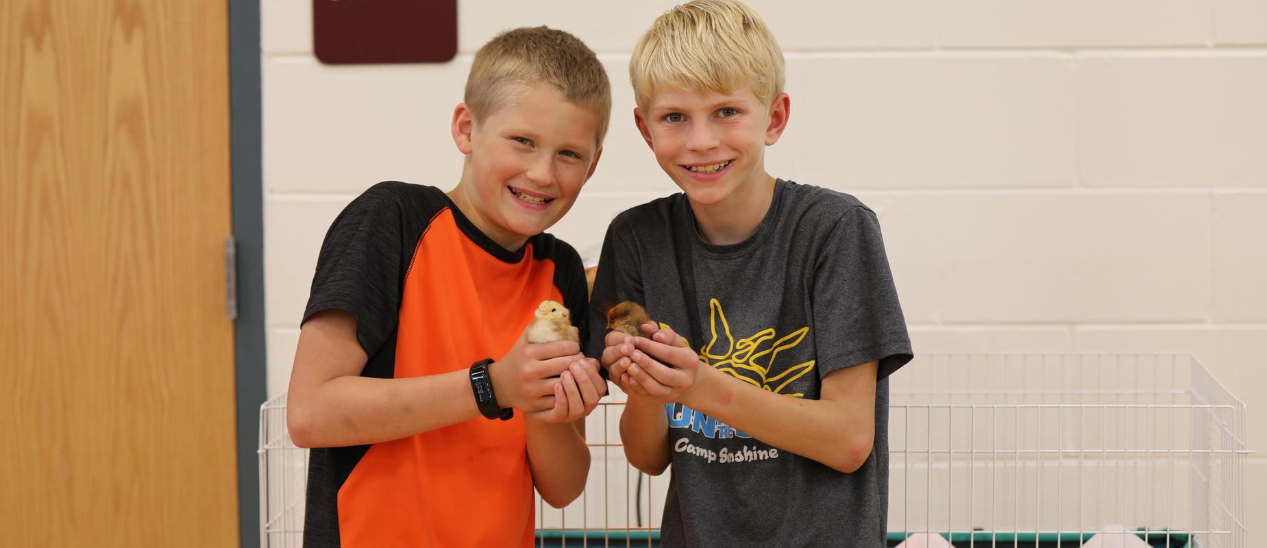 two elementary boys hold onto a yellow chick and a brown chick in a gym