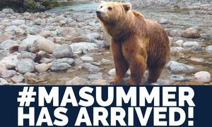 MAsummer