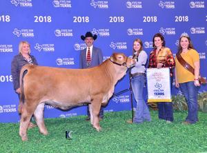 Grand Champion Texas State Fair