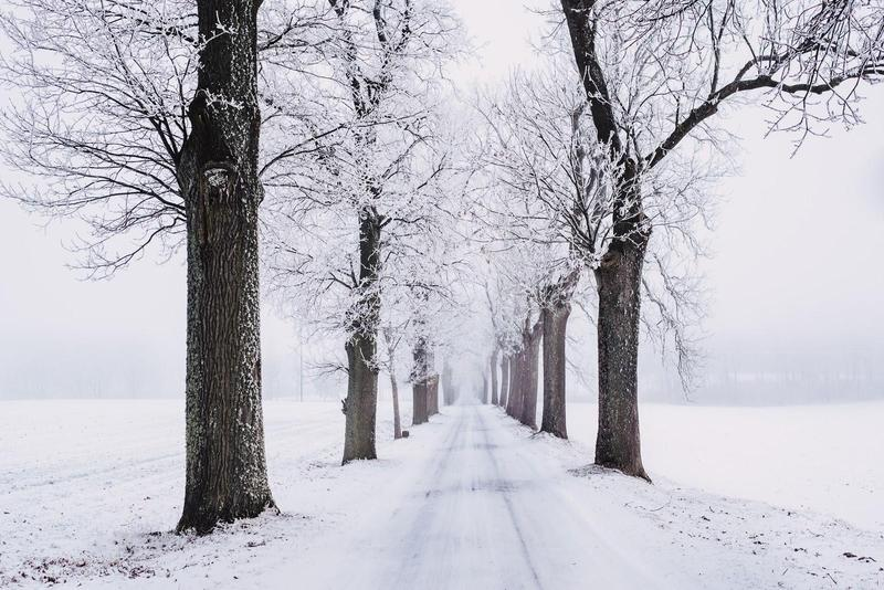 Snowy street lined with trees.
