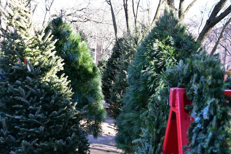 Our Christmas Tree Lot opens Friday, 11/27 Featured Photo
