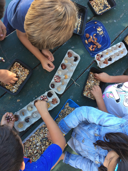Students studying seeds