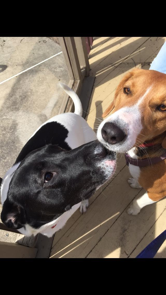 A Photo of Mr. Newton's Dogs