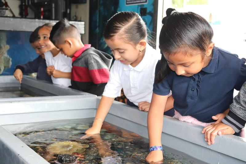 Loma Vista Gets A Special Visit From Aquarium Of The Pacific Featured Photo