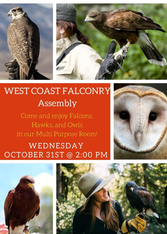 Falconry Flyer
