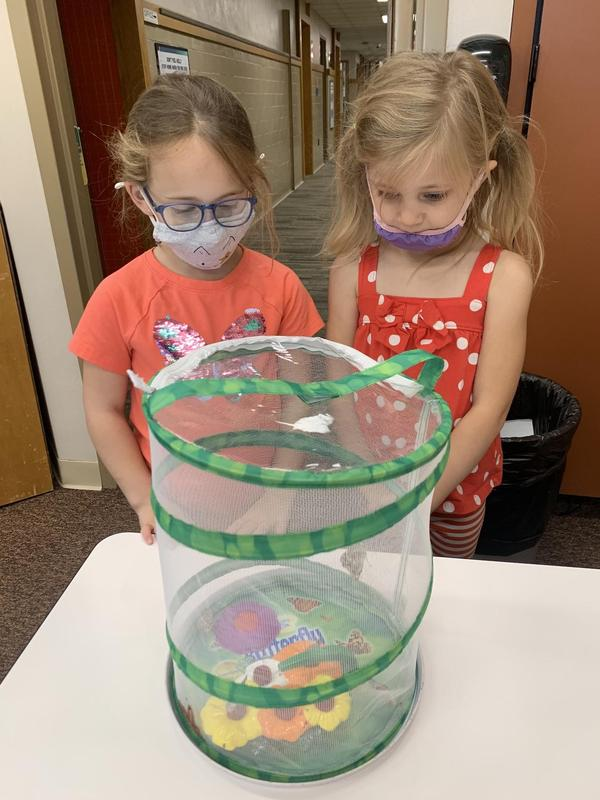 students observing butterflies