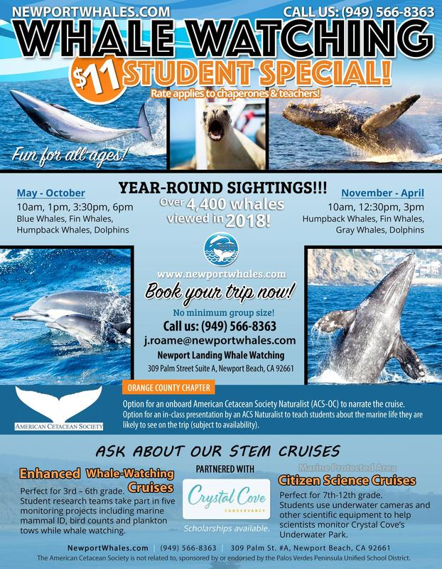 Whale Watching Flyer