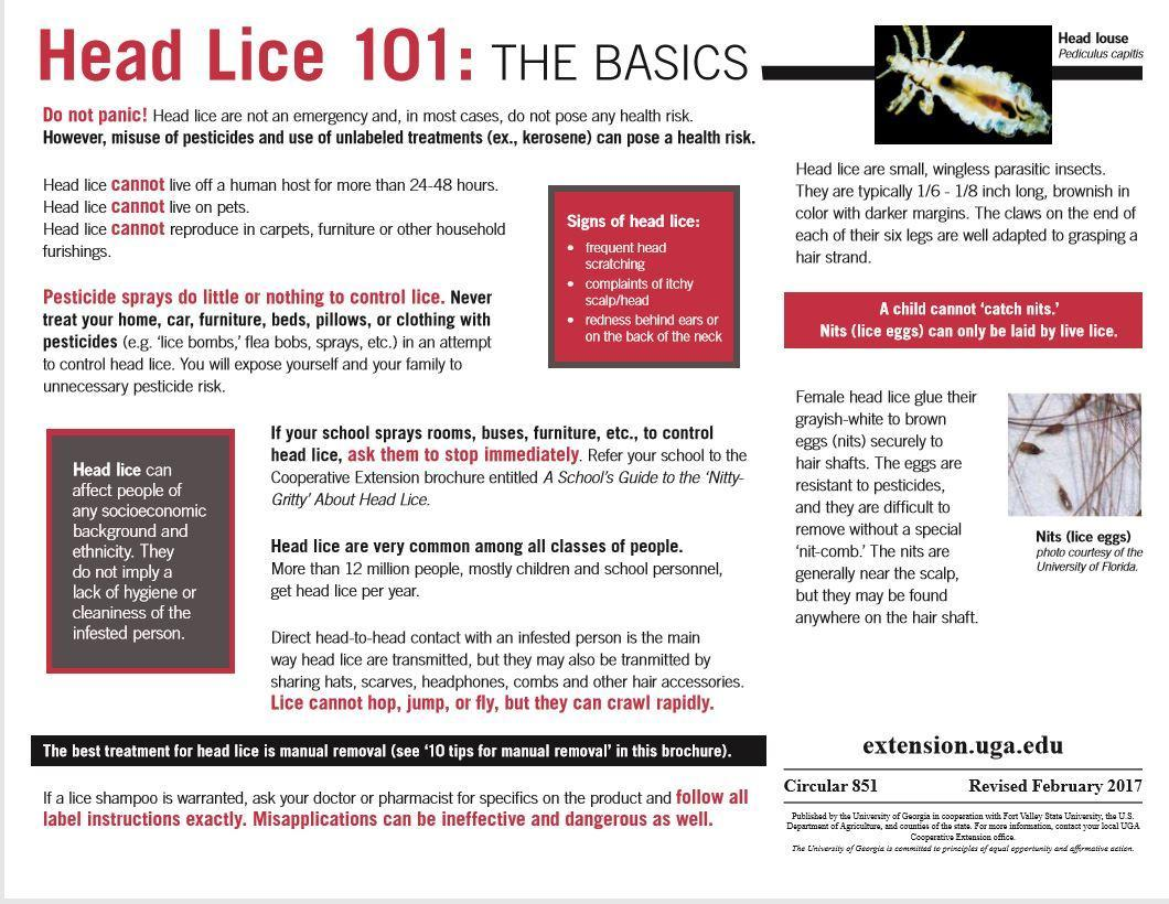Nitty Gritty About Head Lice