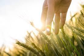 Agriculture pic