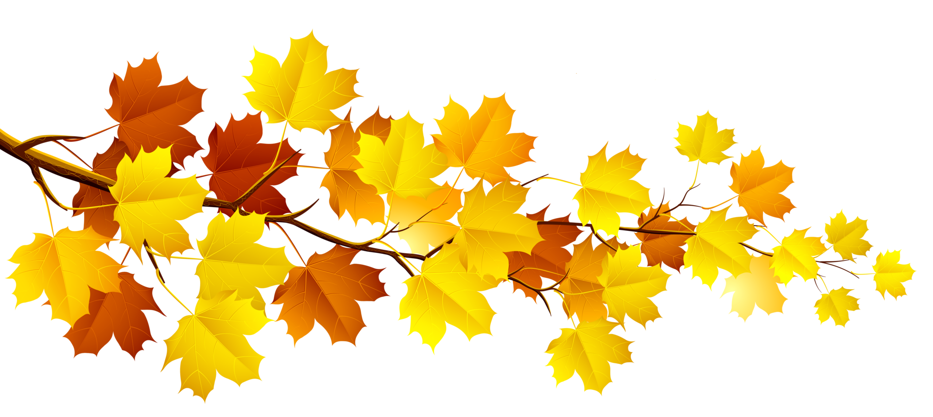Fall leaves on a branch