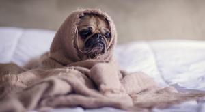 homesick-dog-e1515269561300.jpg
