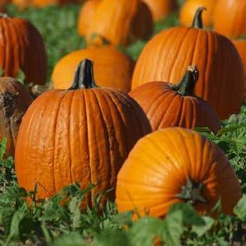 It's Pumpkin Patch Time!! Featured Photo