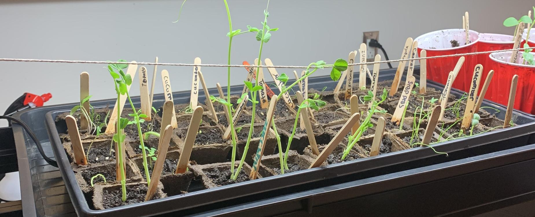 Plants grown by students in a gardening program