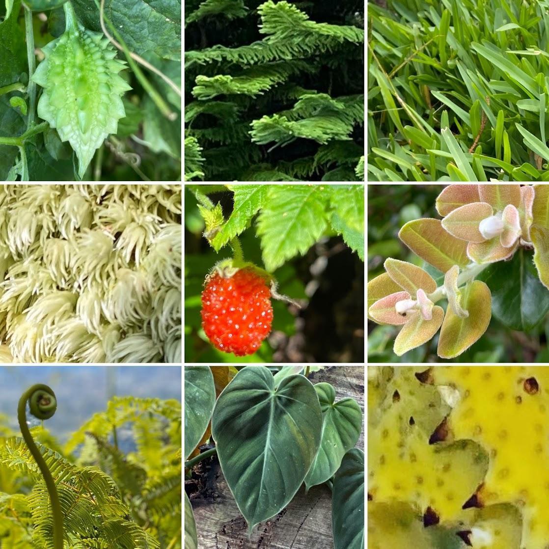 grid of plants