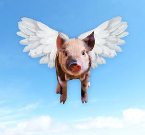 Image of a flying pig.