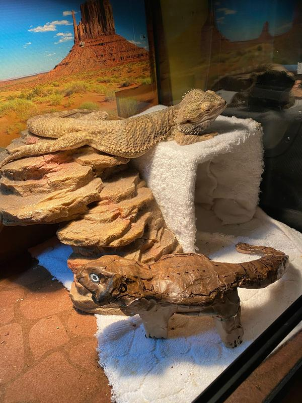 papier-mâché sculpture of bearded dragon next to real bearded dragon