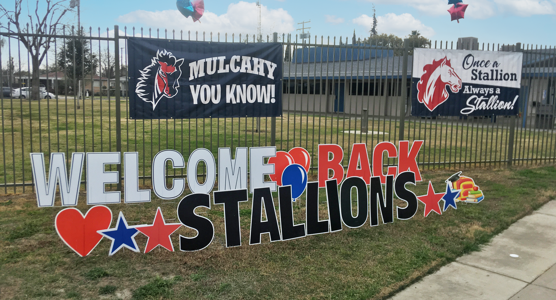 Welcome Back Stallions