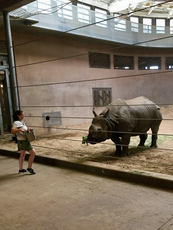 Graduate class encounter with Bandu at Denver Zoo