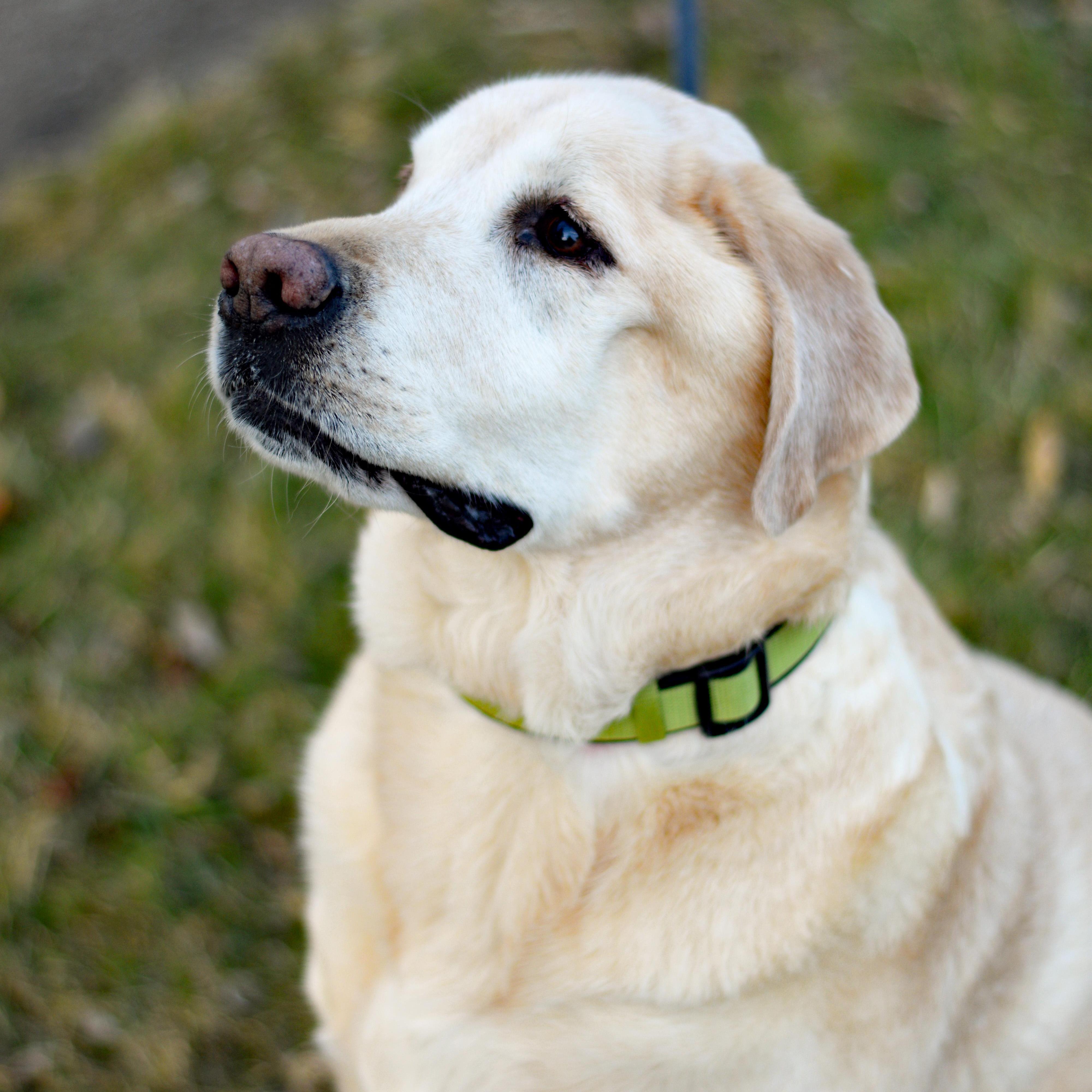 Dorothy Sullivan's Profile Photo