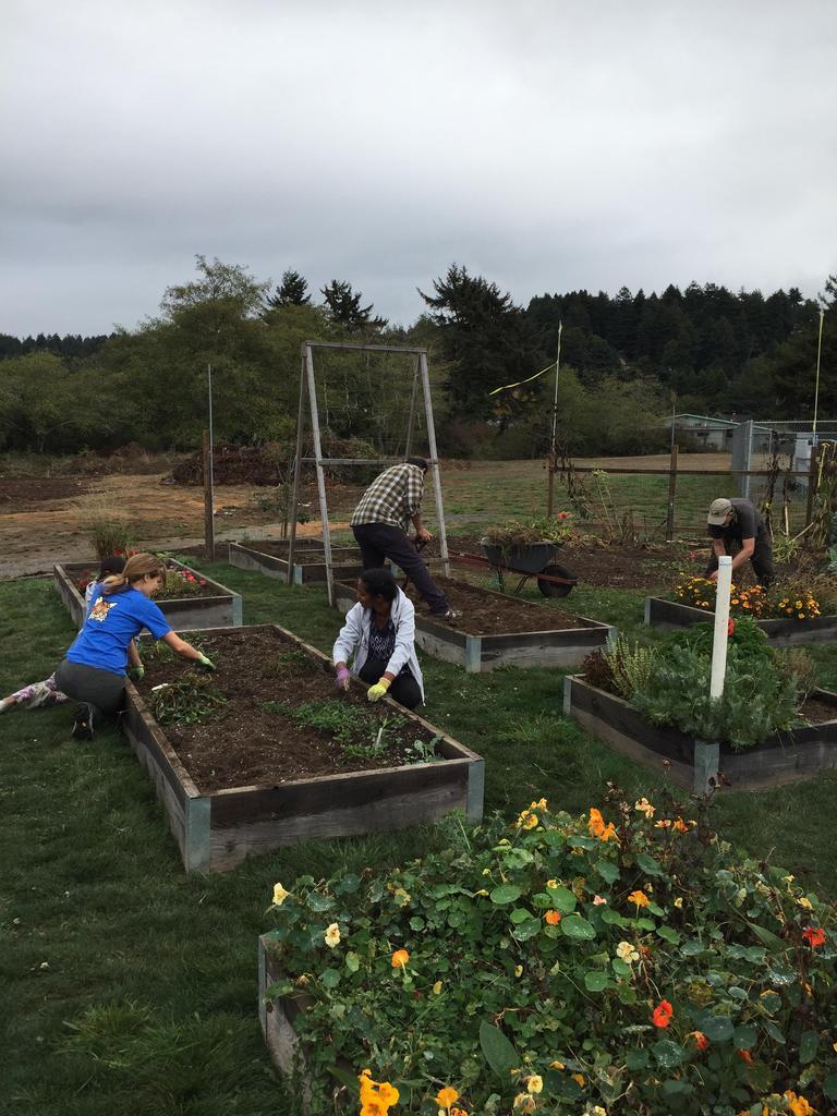 weeding garden beds