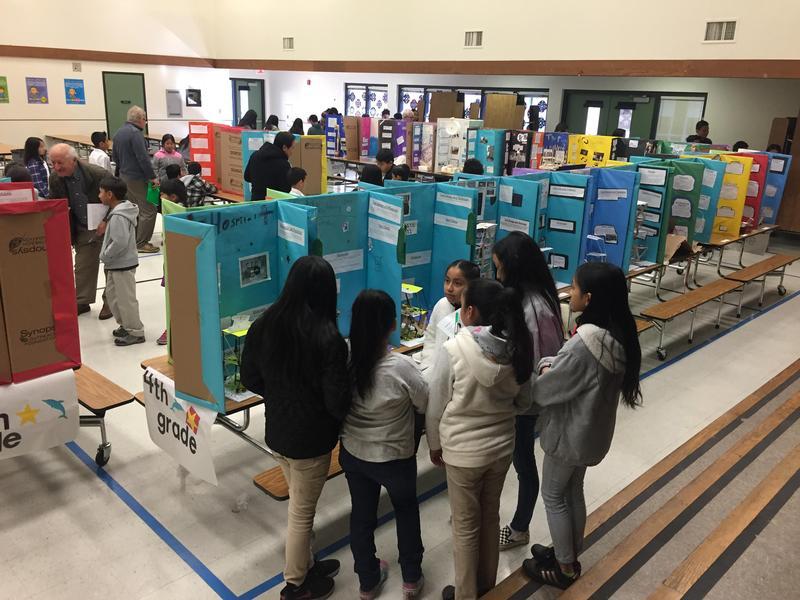 Annual Meadows Science Fair Thumbnail Image