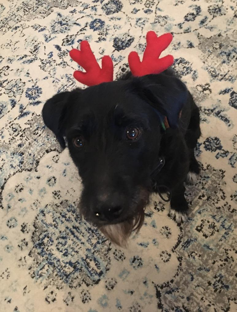 Olive the Unhappy Reindeer