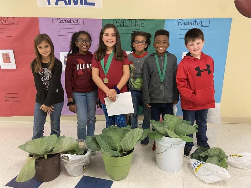 Third Grade Students Participate in a Cabbage Growing Contest Featured Photo
