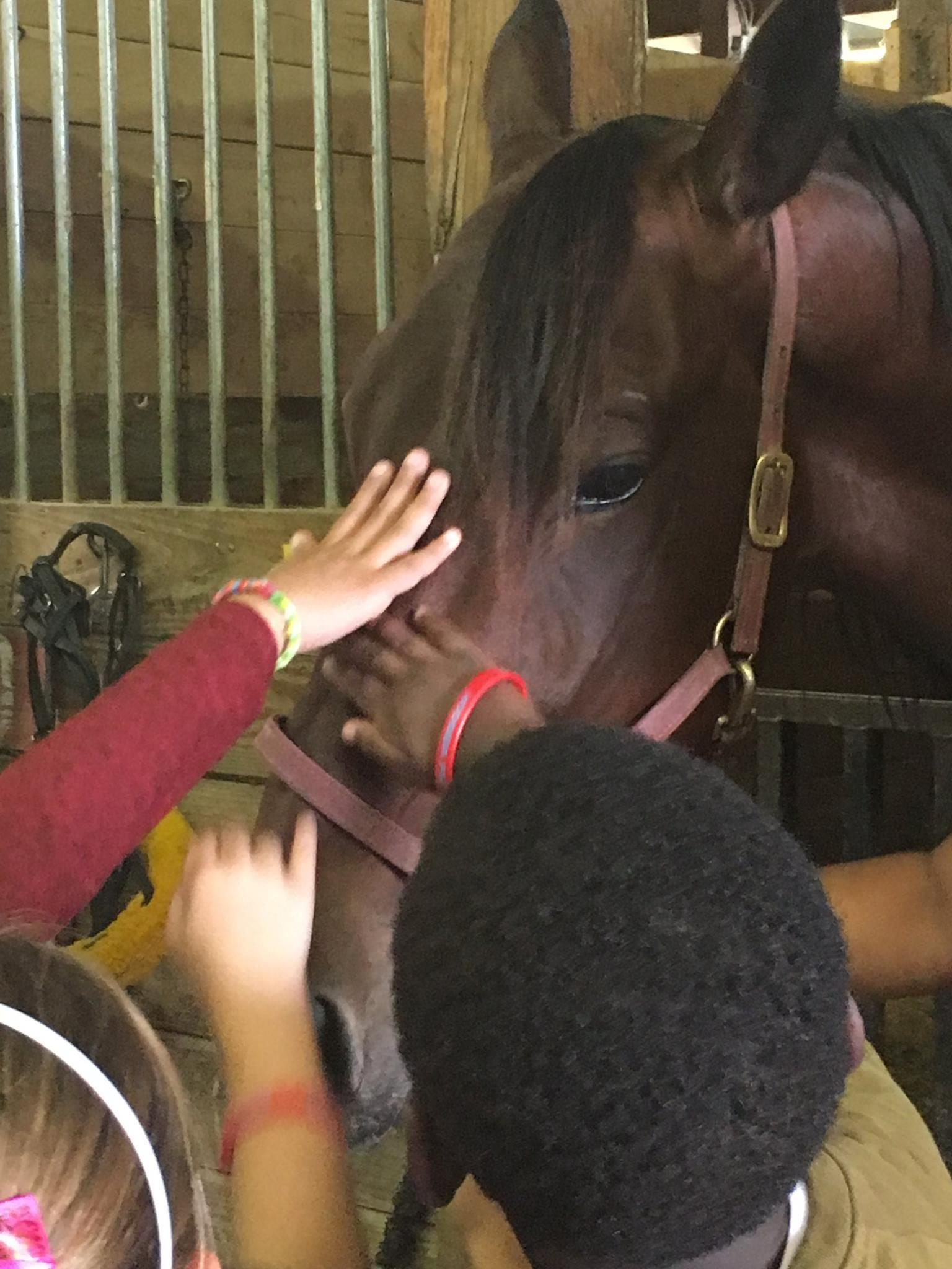 Learning about horses