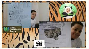 Boy holding his snow leopard project collage