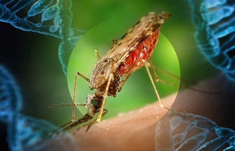 Revolutionary New Development Aids Fight Against Mosquitoes Featured Photo