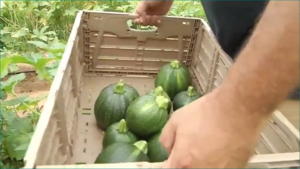 Family farm produce picture from FoxNew25