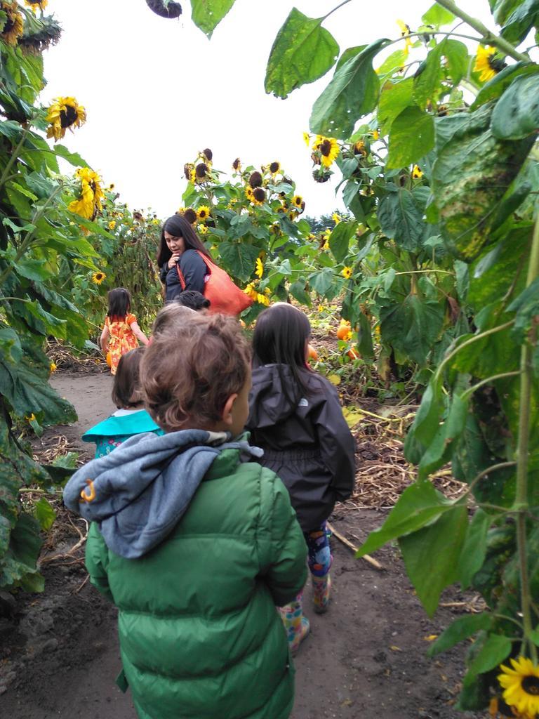 Children walking through corn stalks